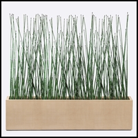 8'L Horsetail Grove in Modern Planter, Indoor