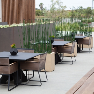 8'L Horsetail Grove in Modern Planter, Outdoor