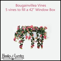 "42"" Window Box Recipe for Bougainvillea Vines"