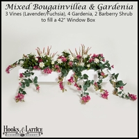 "42"" Window Box Recipe for Mixed Bougainvillea - Lavender/Fuchsia"