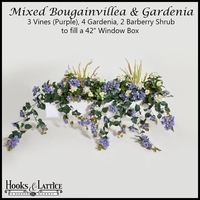 "42"" Window Box Recipe for Mixed Bougainvillea - Purple"