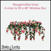 "48"" Window Box Recipe for Bougainvillea Vines"