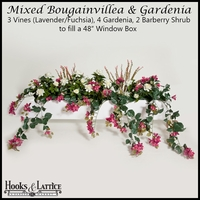 "48"" Window Box Recipe for Mixed Bougainvillea - Lavender/Fuchsia"