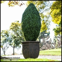 72inH Oblong Topiary, Fire Retardant