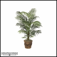 5.5' Dlx Areca Palm Tree - Green | Indoor