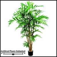5.5' or 7.5' New Bamboo Palm