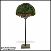 5' Hemisphere Umbrella Boxwood Topiary Tree - Outdoor