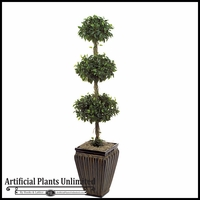 5' Triple Ficus Topiary Tree - Indoor