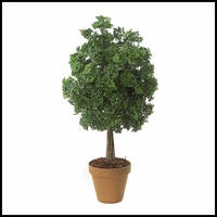 50in. Outdoor Rated Ming Aralia Bush