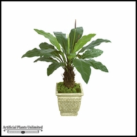 51in. Anthurium Plant - Two Tone Green|Indoor