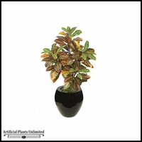 "52"" Croton Bush - Multi 