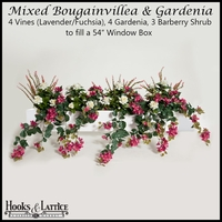 "54"" Window Box Recipe for Mixed Bougainvillea - Lavender/Fuchsia"