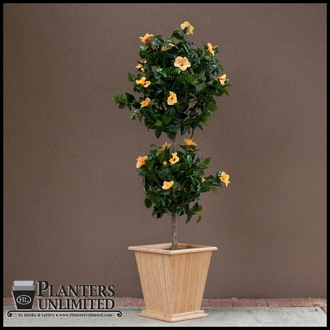 6' Artificial Hibiscus Flowering Topiary