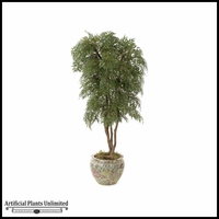 6' Lace Aralia - Green | Indoor