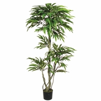 6' Mango Topiary Tree, Outdoor Rated