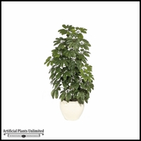 6' Schefflera - Green|Indoor - NFR