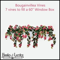 "60"" Window Box Recipe for Bougainvillea Vines"