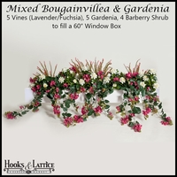 "60"" Window Box Recipe for Mixed Bougainvillea - Lavender/Fuchsia"