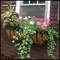 "60"" XL Scroll Window Box w/ XL Coco Liner"