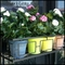 60in. Contemporary Window Box Cage