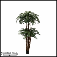7' Umbrella Cycas Palm