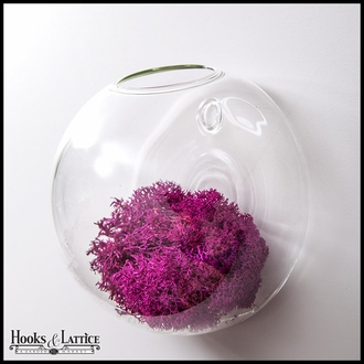 """7"""" Wall Bubble Terrarium with Moss"""