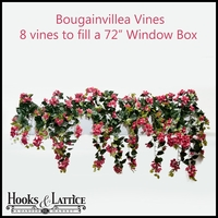 "72"" Window Box Recipe for Bougainvillea Vines"