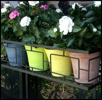 "8"" Color Pots with Water-Minder"