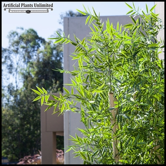 8'H Bamboo Forest Sold by the Square Foot, Outdoor