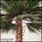 12' Preserved Washingtonia Palm Tree