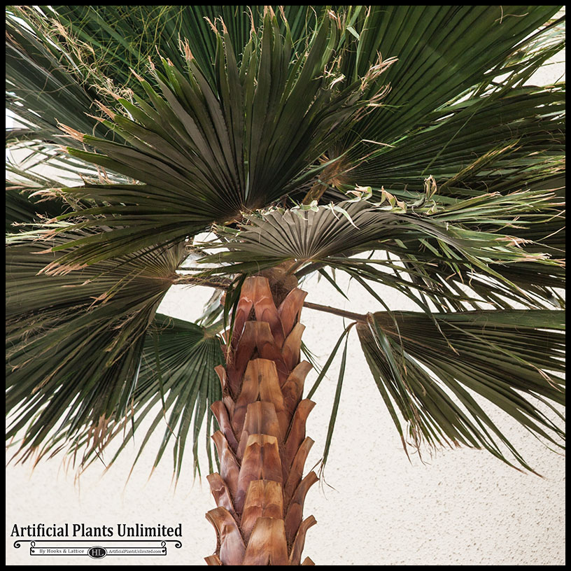 8-preserved-washingtonia-palm-tree-5 Palm Tree Indoor House Plants That Look Like on yucca palm tree plants that look like, palm trees as indoor plants, weed plants that look like,
