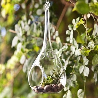 "8"" Water Drop Hanging Terrarium"