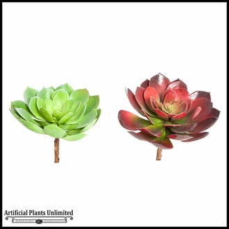 8in. Large Echeveria, Green/Burgundy