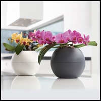 8in. Sanya Self-Watering Orchid Planter
