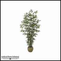 9.5' Bamboo Palm - Green Cane|Indoor