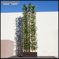 96in.L Jumbo Bamboo Grove in Modern Planter, Indoor