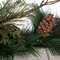 9ft Artificial Sugar Pine Garland