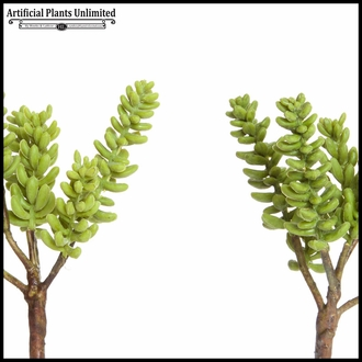 9in. Dogtail Succulent - 2 Colors