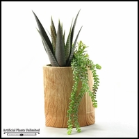 20in. Aloe Plant and Hanging Sedum in Tall Oval Wooden Planter