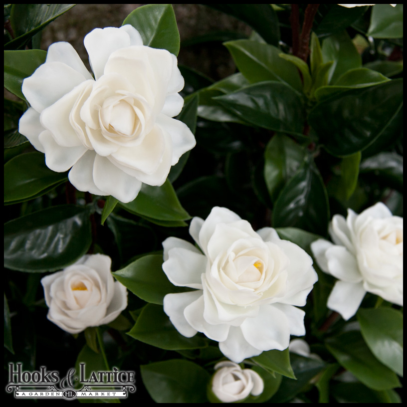 artificial gardenias for outdoor use, silk gardenia, Beautiful flower