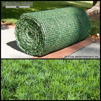 Artificial Podocarpus Indoor Roll|3 Sizes to Choose From