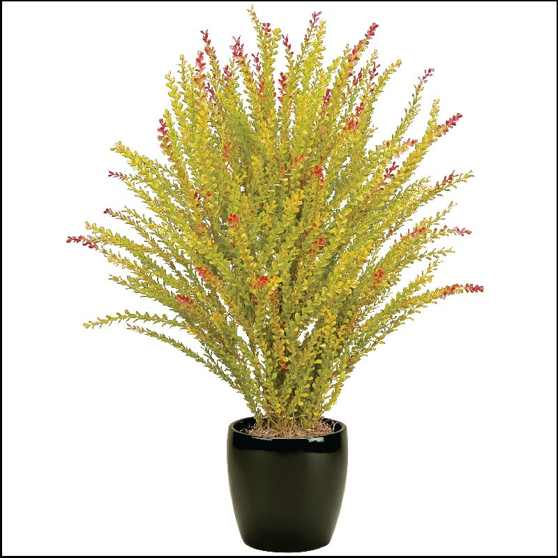 Indoor outdoor potted grass and decorative urn images for Decorative tall grass plants