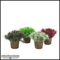 Assortment Of Cedar Leaf Bushes, Set Of 4