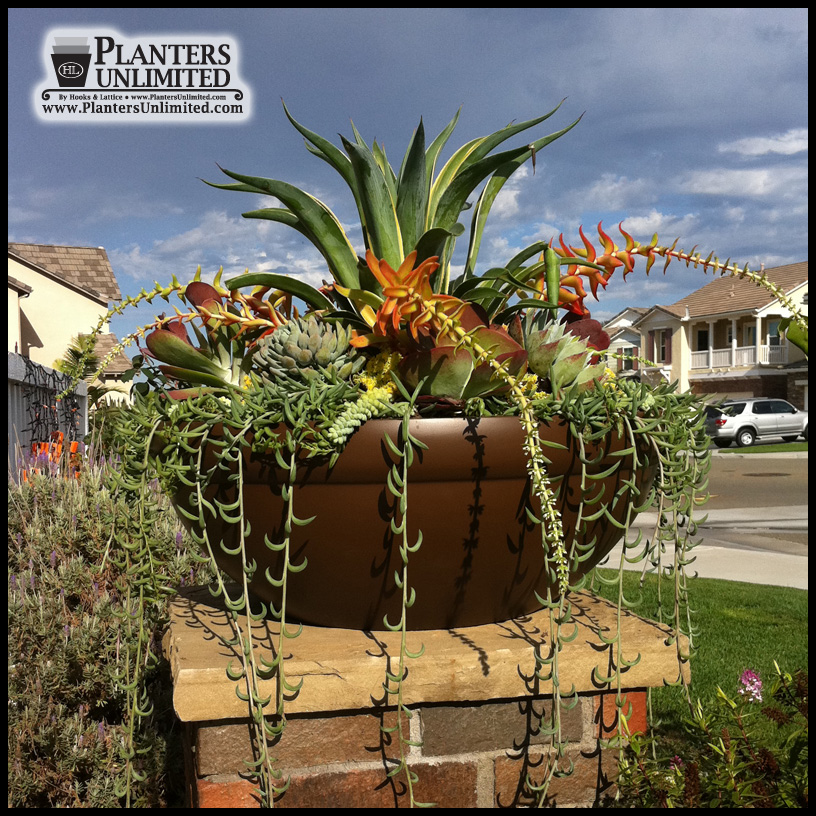 Excellent Outdoor or Indoor Low Bowl Planters, Custom Sizes, Styles and Finishes XN24