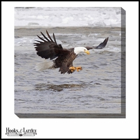 Bald Eagle Fishing - Canvas Artwork