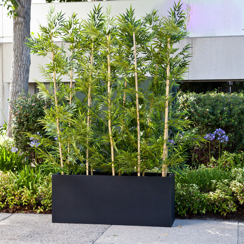 Bamboo grove privacy screen in modern fiberglass planter for Privacy wall planter