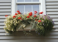Barbara Delle Donna's Supreme Fiberglass Window Box