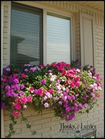 Betty Giordano's XL Catalina Premier Window Box