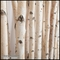 4'L x 6'H Birch Pole Screen in Modern Fiberglass Planter