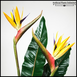 Bird of Paradise Modern Arrangement